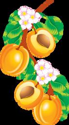 Peach PNG