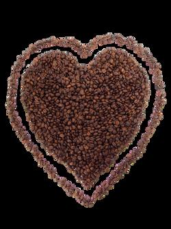 bean-2484_Clip