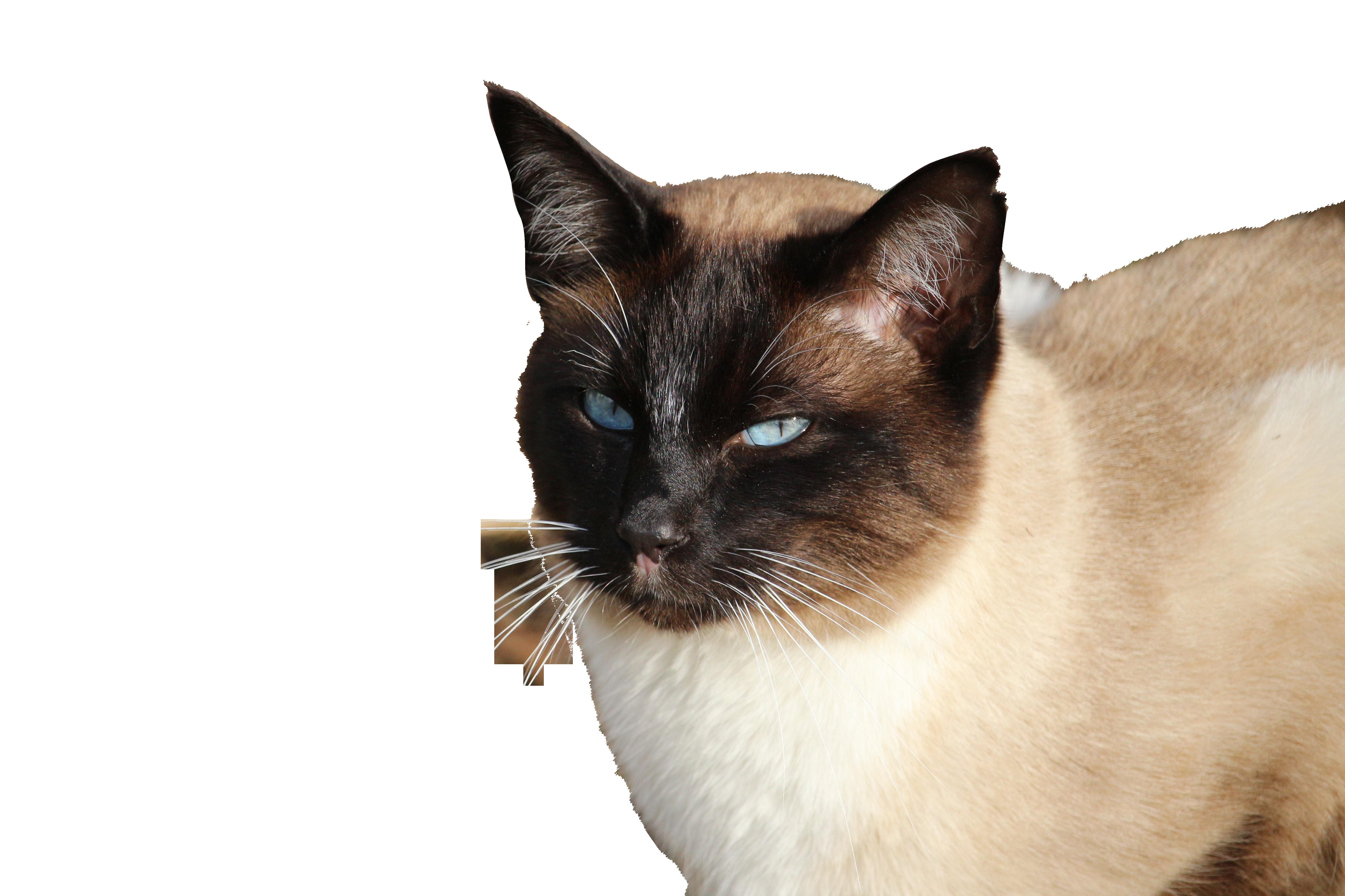cat-1184995_Clip