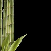 Bamboo (18).png