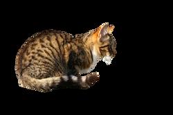 cat-1196308_Clip