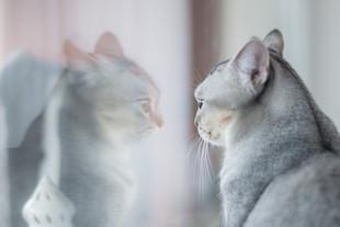 Cossyimages Kitten (4).jpg