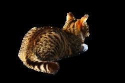 cat-1166181_Clip