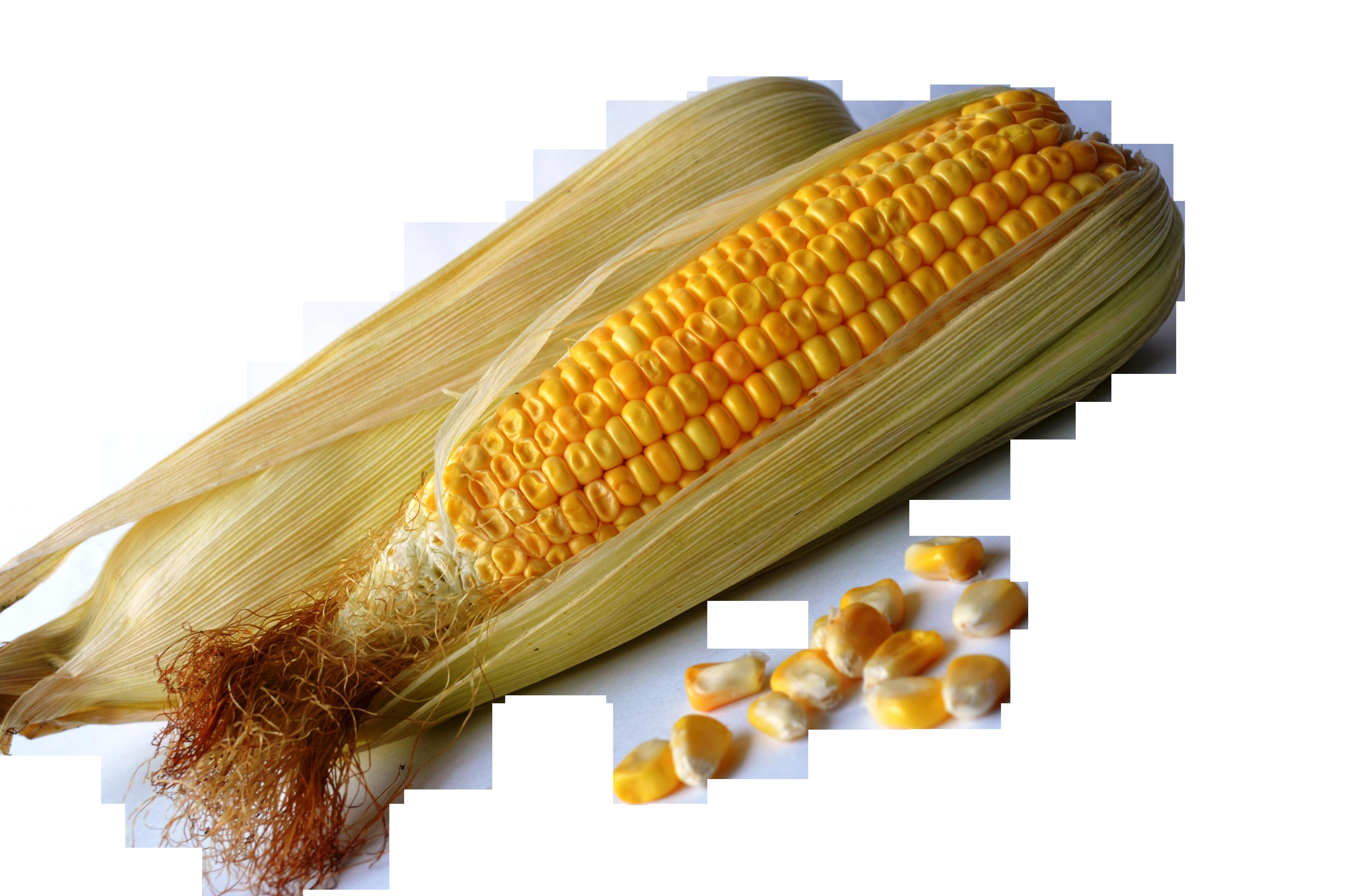 corn-389904_Clip