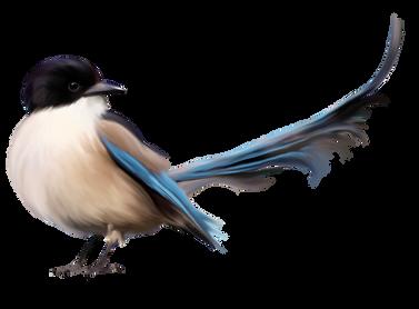 Bird PNGs
