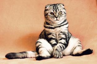 Cossyimages Kitten (9).jpg
