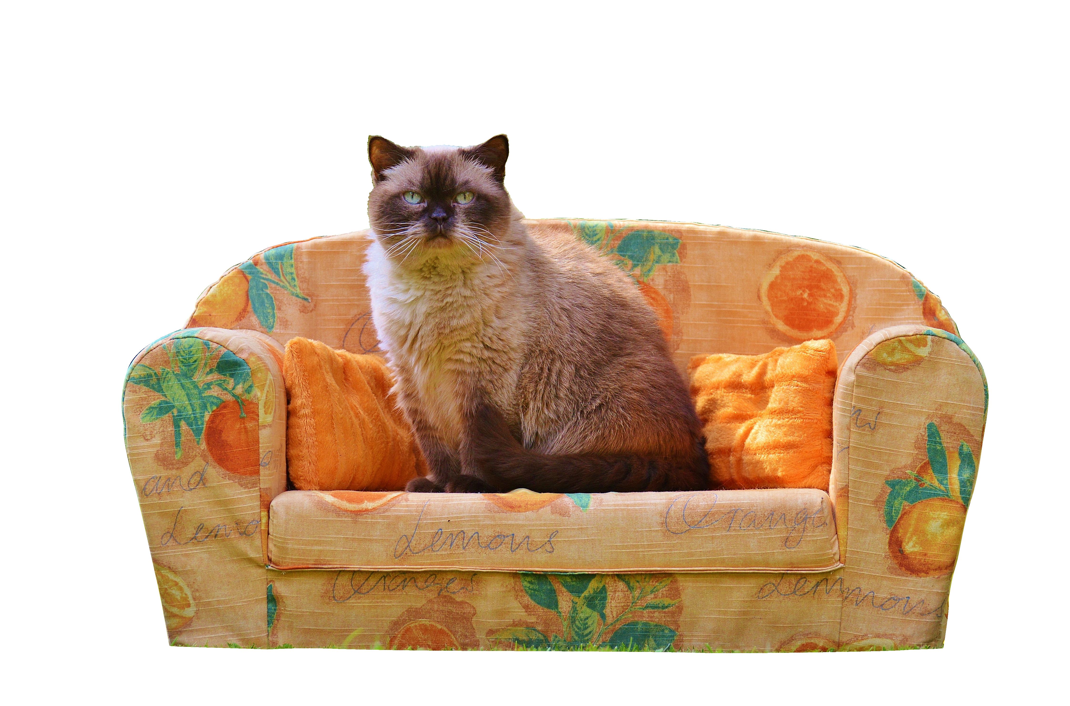 sofa-788537_Clip