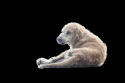 dog-1068275_Clip