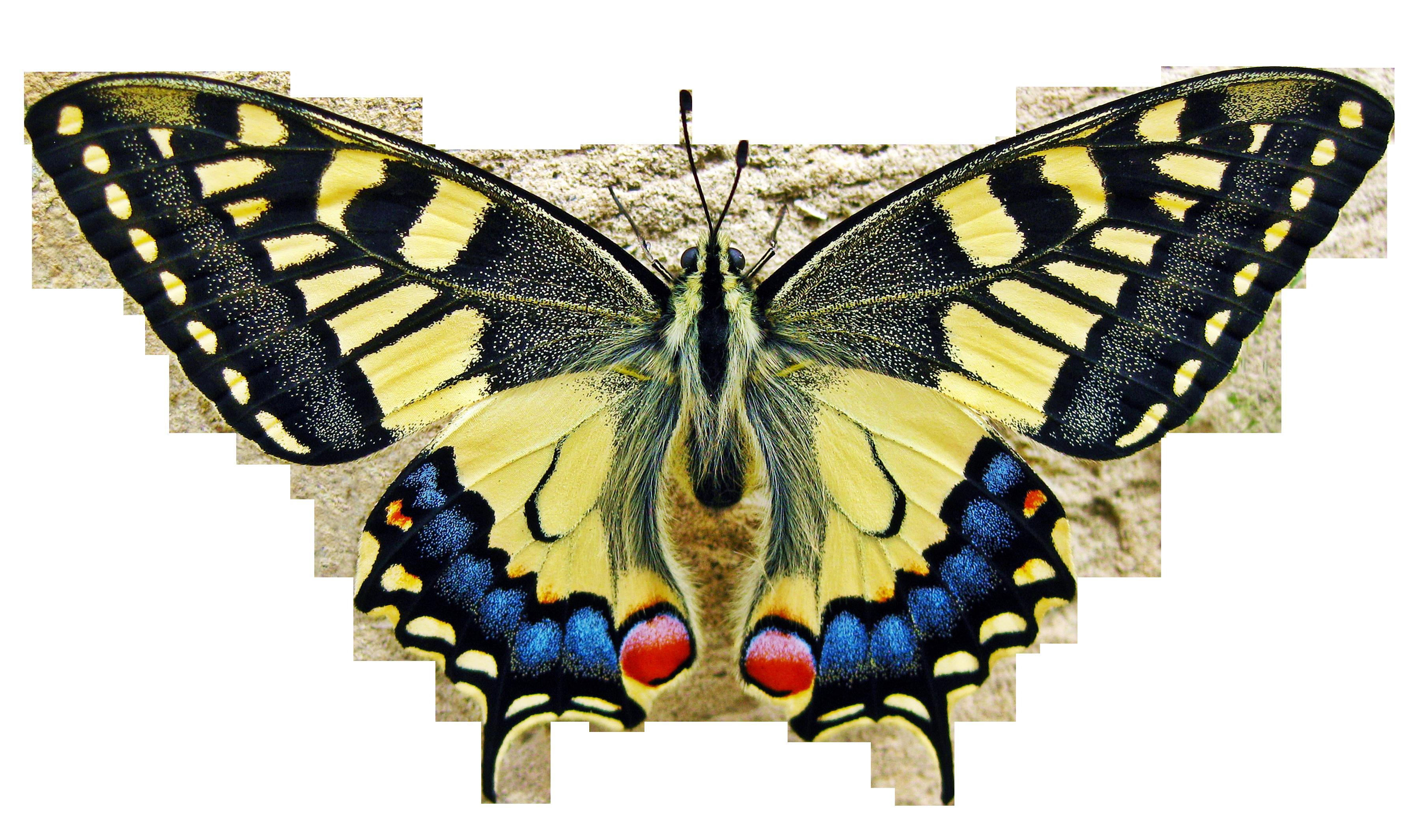 butterfly-1228639_Clip