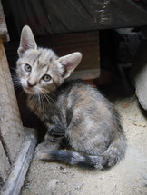 Cossyimages Kitten (15).jpeg