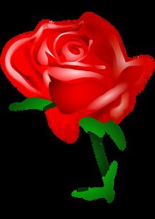 Rose, free pngs