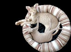 cat-202071_Clip