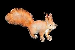 the-squirrel-224312_Clip