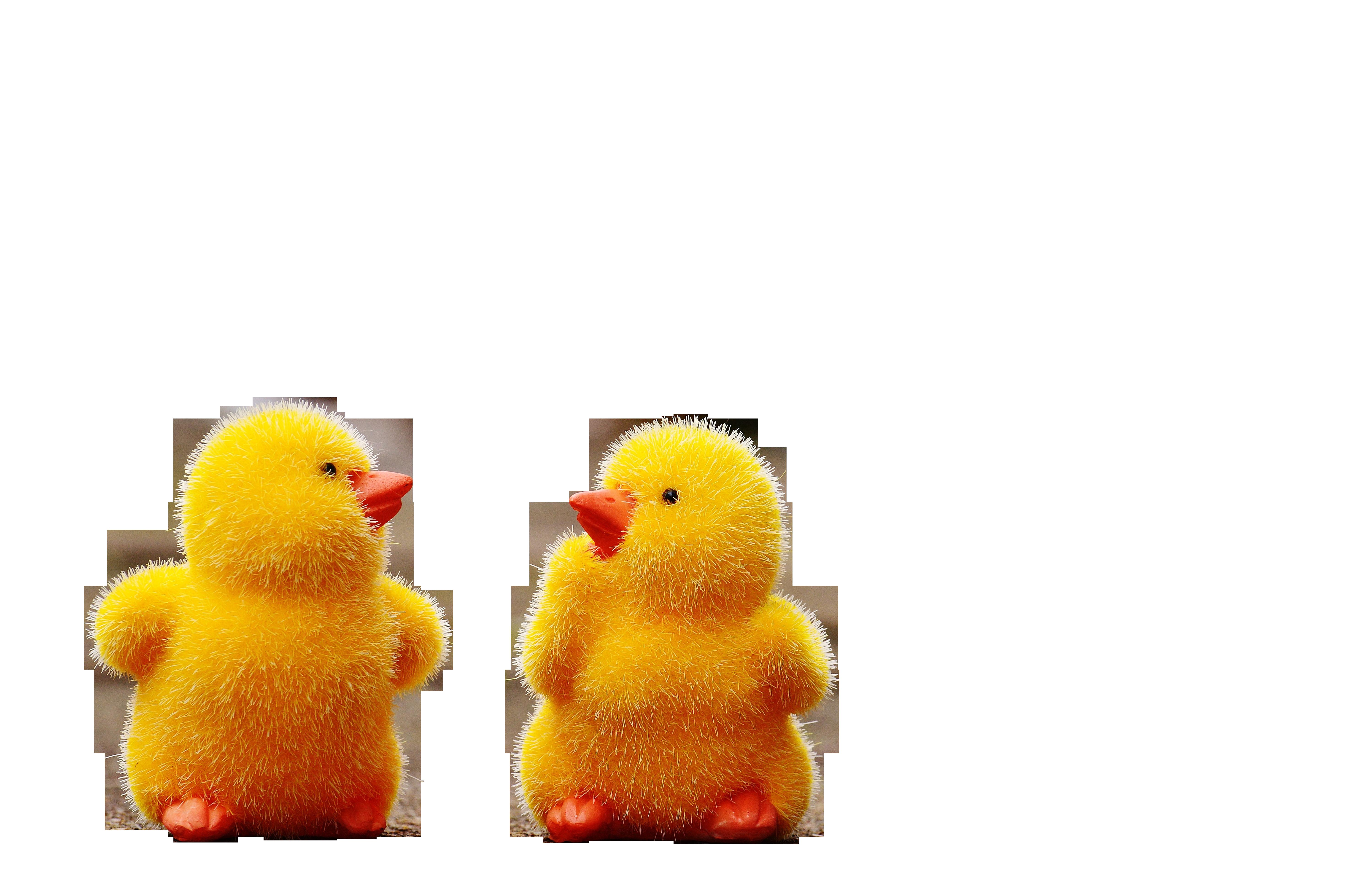 chicks-1159194_Clip