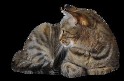 cat-1129371_Clip