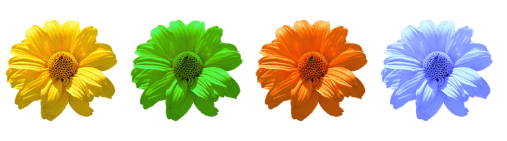 flower-2947857__340.png