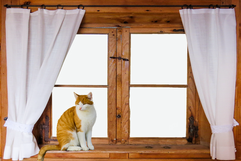 PNG images: cat, window