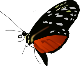 Butterfly_dark.png