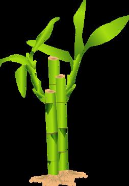 Bamboo (13).png