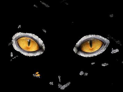 Eyes transparent images
