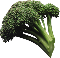 Broccoli, free PNGs
