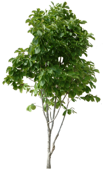 Tree PNG images