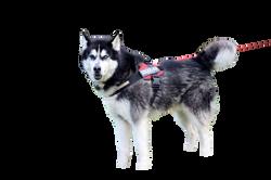 dog-314308_Clip