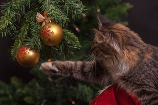 Cossyimages Kitten (53).jpeg