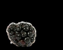 berry-1239101_Clip