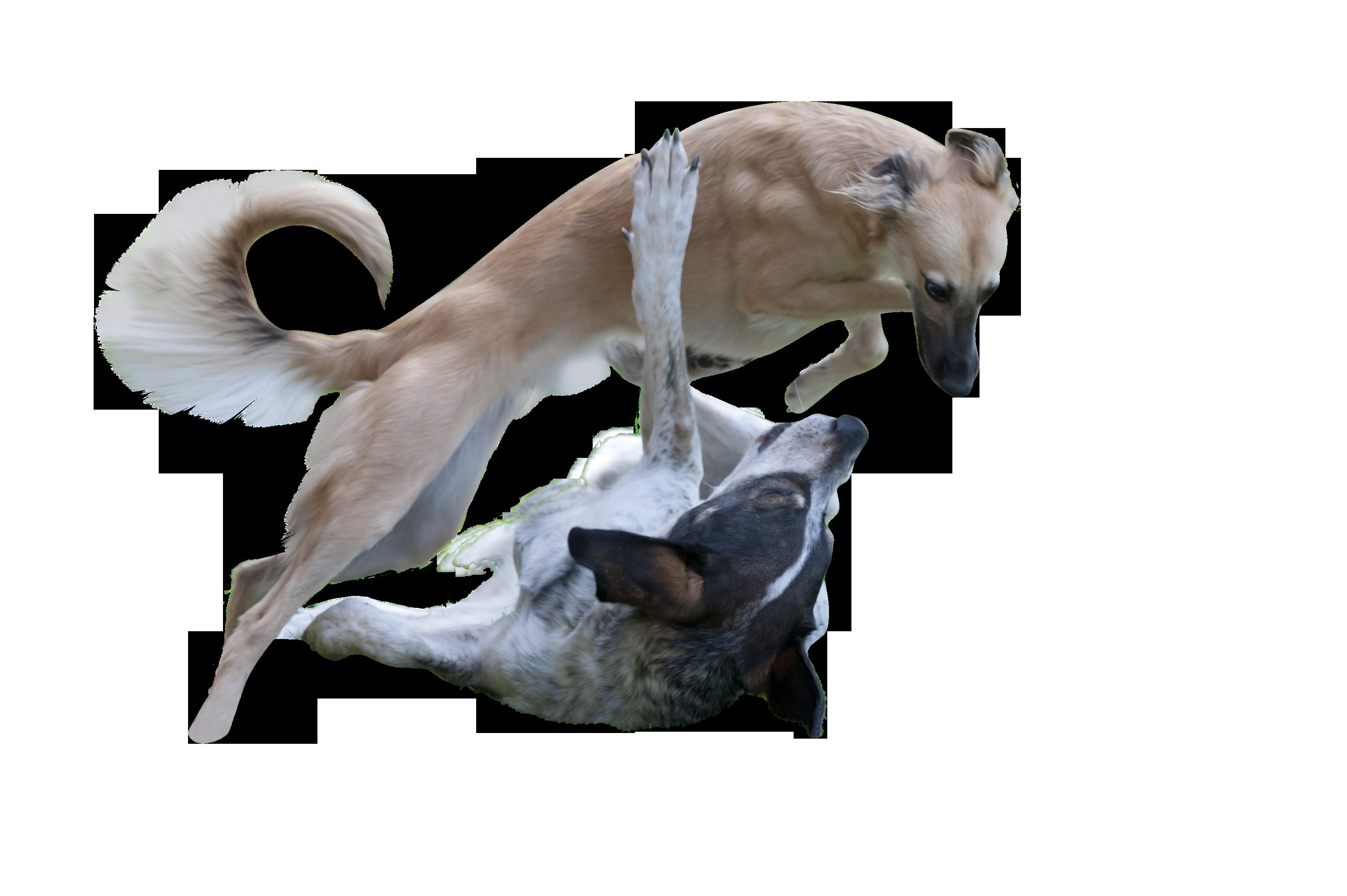 dog-835679_Clip
