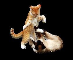 cat-1234947_Clip