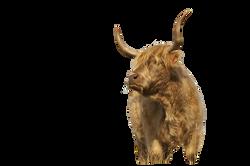 cow-601233_Clip