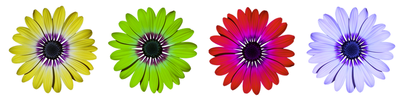 flower-2947858__340.png