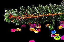 spruce-1040050_Clip