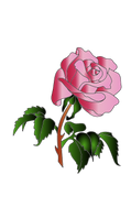 0016_aw_rose070908_01_coloris.png