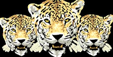 leopard-312247__340.png