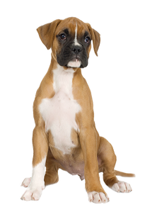 Free png dog images.