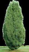 cypress-1763653_1280.png