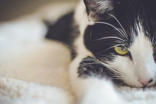 Cossyimages Kitten (37).jpeg
