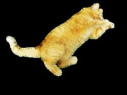cat-287022_Clip