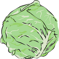 cabbage-559887__340.png