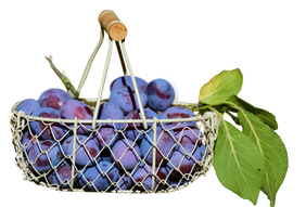 plums-in-the-basket-2644651_1280.png