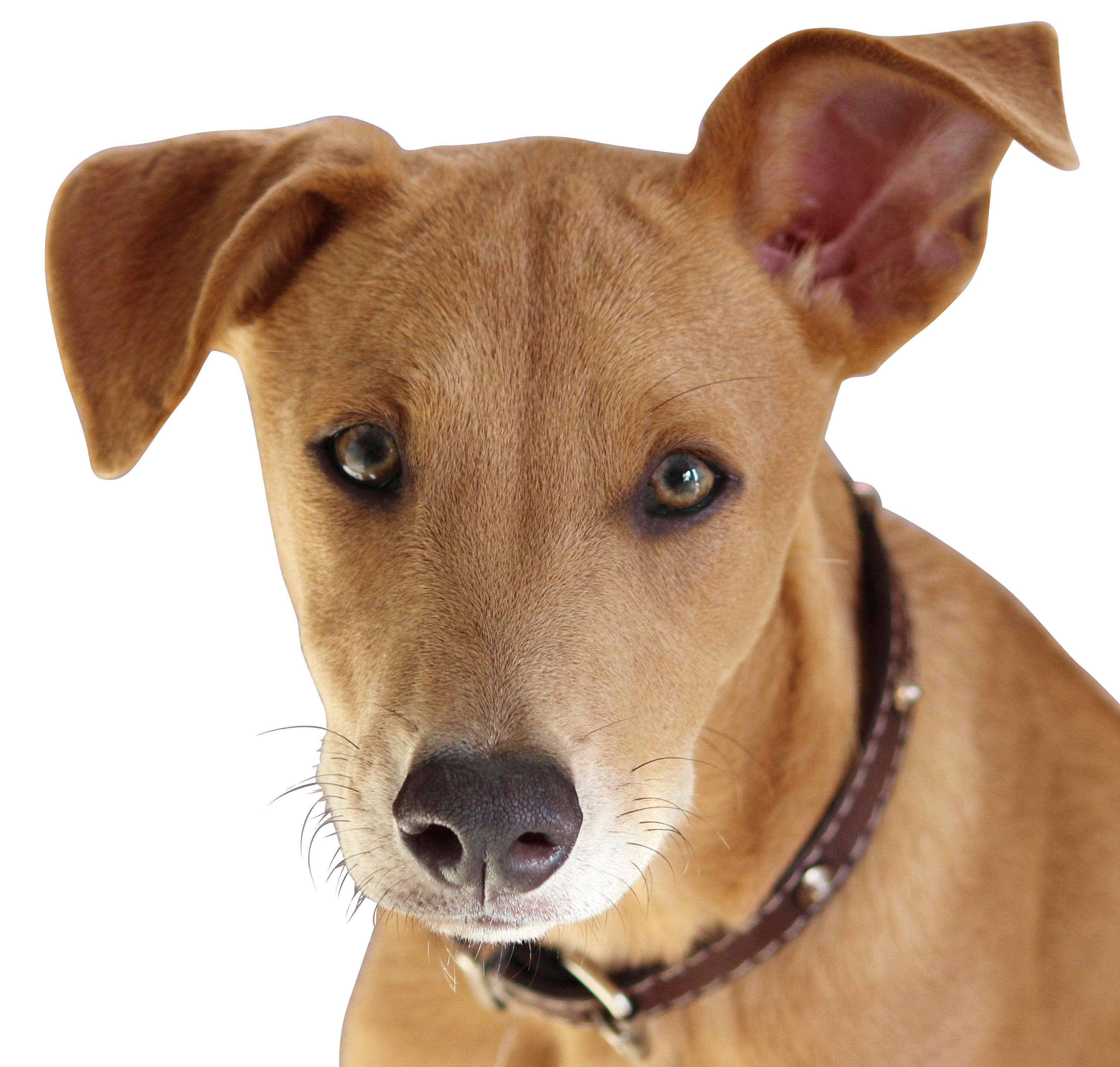 dog-624269_Clip