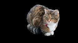 cat-1263659_Clip