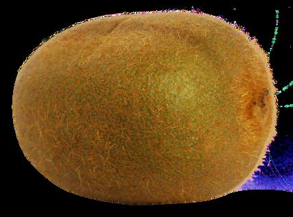 Kiwifruit-PNG-Image2.png