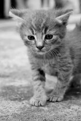 Cossyimages Kitten (3).jpeg