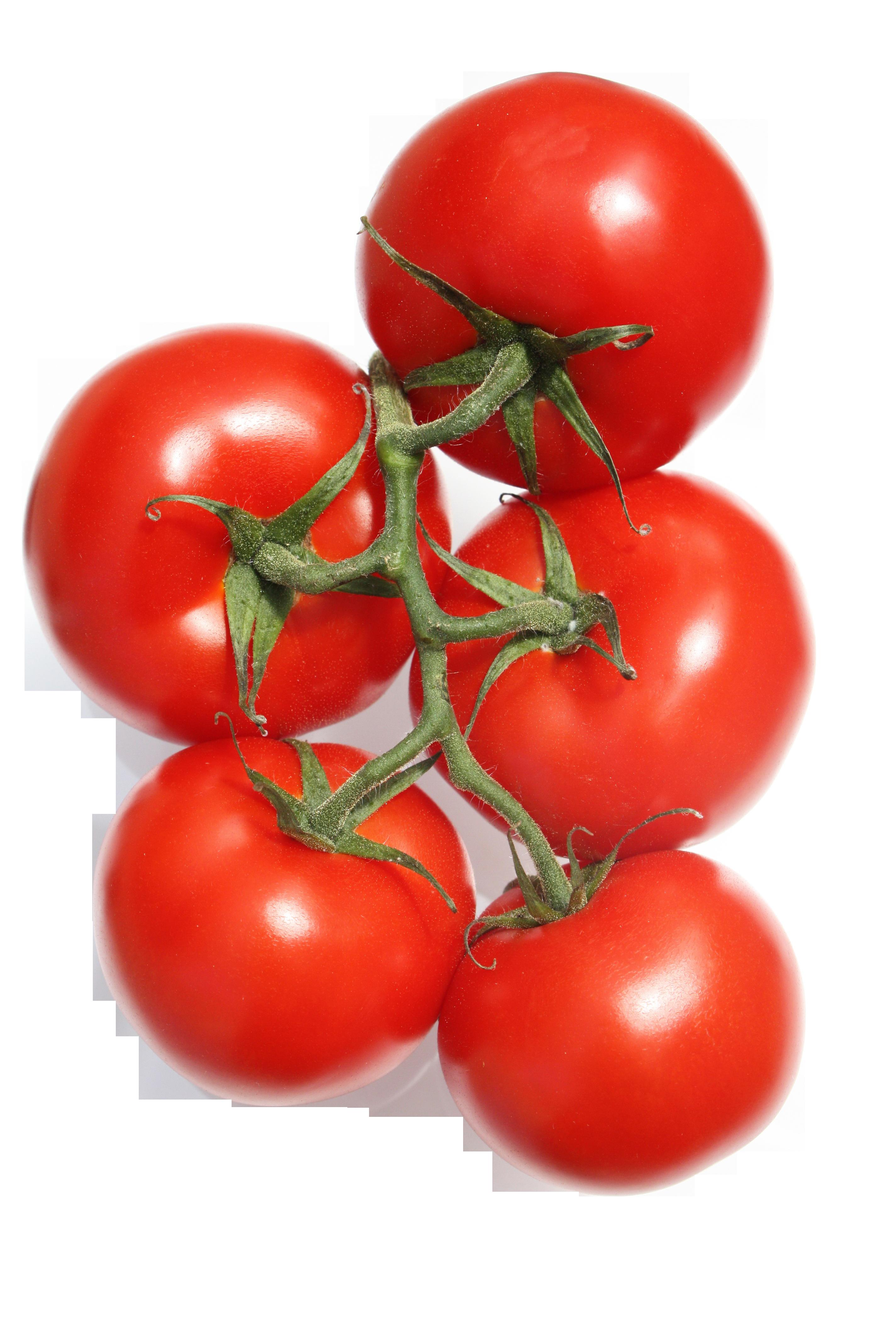 tomato-473764_Clip