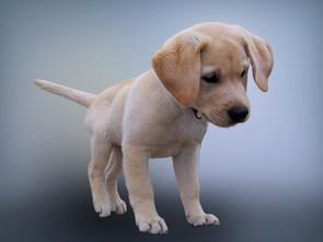 Cossyimages Puppy (24).jpg