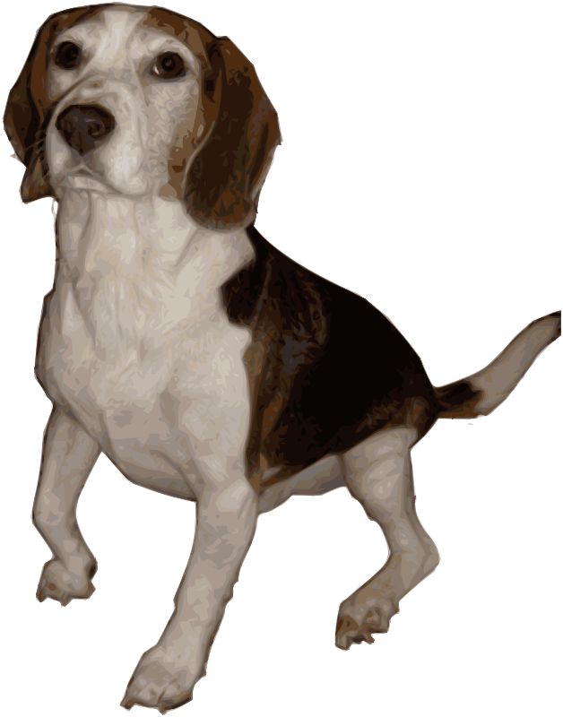 Beagle_1_by_Merlin2525-medium
