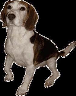 Beagle_1_by_Merlin2525-medium